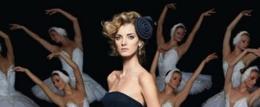 fashion photo of black swan